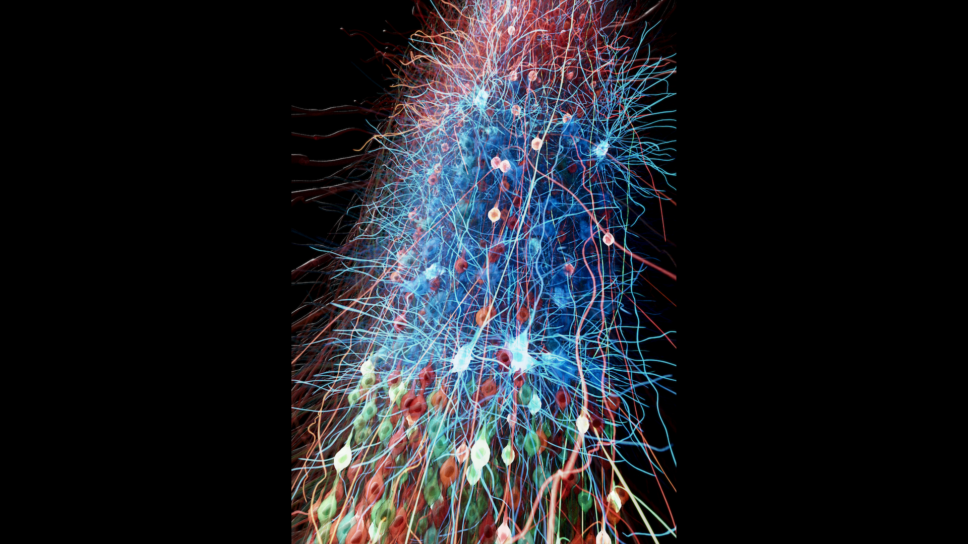 Model of motor cortex circuits developed with NetPyNE tool (netpyne.org). Visualization: nicolasantille.com